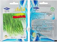 5 Packungen: 500 Samen Schnittlauch Samen Anbau