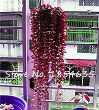 5: Rare Bonsai Blumensamen-Hausgarten-Aerobic Topf