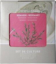 5 Stück Esschert Design Anzucht-Set Rosmarin, Saatgut und Blumenerde inkl. Raku-Blumentopf und Untersetzer und Zink-Pflanzstab