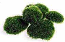 5x Grün Moos Home Garden Pflanze getopft