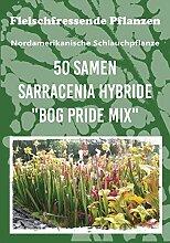 50 frische Samen der außergewöhnlichen Schlauchpflanze - die Sarracenia ist eine beliebte und vielfältige fleischfressende Pflanze für Wohnung und Garten - hochwertiges Saatgu