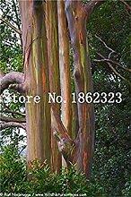50 PC/Beutel Seltene Eukalyptus Bonsai Riesen