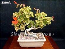 50 PC Exotische Geranium Baum Samen Stauden Pelargonium Peltatum Blumen Topf Geranium Pflanze Bonsai-Baum-Schönheit Ihr Garten 11