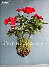 50 PC Exotische Geranium Baum Samen Stauden Pelargonium Peltatum Blumen Topf Geranium Pflanze Bonsai-Baum-Schönheit Ihr Garten 2