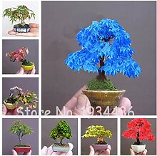 50 Pcs Rare Tree Bonsai Plant for Home Garden,