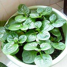 50 Samen / pack Hausgarten Pflanze, orange süß Paprika, Mohawk Paprika Gemüsesamen,