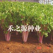 50 Samen / pack Mehrfarbenselleriesamen High Quality Health Care Nutrition Samen-Garten-Dekoration Bonsai Blumensamen
