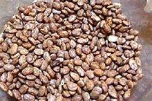 50 Samen Pinto Bohnen Samen neue Samen für 2017