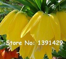 50 Samen Yellow Kaiserkrone Seeds Kaiserkrone Lutea Samen Easy To Pflanze Bodendecker Anlage wachsen, Bonsai für Garten