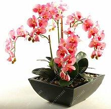 50 Stück/Beutel Bonsai Blume Orchidee Samen,