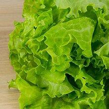 50 Stück Salatblätter Samen Nahrhaftes Gemüse