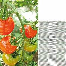 50 Tomatenspiralstäbe 110cm voll verzinkt Tomatenstab Tomaten Ranke Pflanzstab Stahl Profi Qualität Tomatenspiralstab