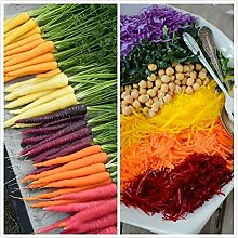 500 Stück Gemischte Farbe Karottensamen