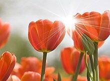 500 Watt Bildheizung Infrarotheizung Flachheizung Elektroheizung Infrarotheizpaneel Heizpanel (Tulpen)
