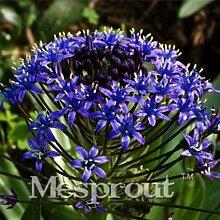 500pcs Lavendel Samen Kraut Samen Garten Balkon Topf Vier Jahreszeiten Blumensamen