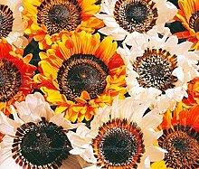 50pc Knoblauch Chrysantheme Einfuhr Topfblumen Sedum Sukkulenten Samen Zierpflanze für Zuhause gardenrden Mix