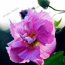50pcs / bag Mischfarben Hibiscus mutabilis Samen Speiseteller Hibiscus Staudenblumensamen für Gartenhaus 5 Bepflanzung