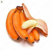 50Pcs Banana Samen Obst Samen Exotische Früchte