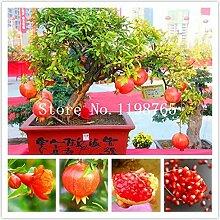 50pcs Bonsai-Baum Granatapfelkerne nach Hause Pflanze Köstliche Fruchtsamen sehr groß und süß für Pflanzen heimischer Gärten sprießen 95%