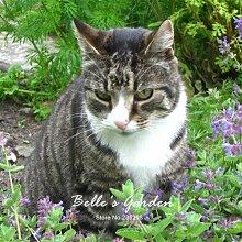50pcs Catmint Nepeta Cataria Samen Catnip Staude Blumensamen Bonsai Pflanze DIY Hausgarten