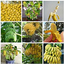50Pcs Dwarf Banana Samen Fruit Mini Samen Rosa im
