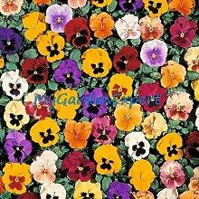 50pcs / lot Mix-Farbe Tricolor ViolaPansy Seed Kräuter Trinity Petite Mix Blumensamen Garten Bonsai Samen Pflanze