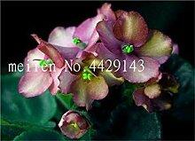 . 50pcs Mini Violet Pflanzen Seltene afrikanische