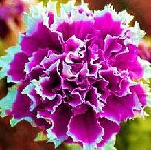 50pcs / pack Samen Jasmin Blume weiß Jasmin Samen, duftende Pflanze arabisches Jasmin Samen