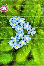 50pcs seltene blaue vergessen mich nicht freies Verschiffen DIY Bonsai Zierpflanze für Hausgarten 2 Hof