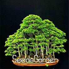 50Pieces/Bag Juniper Bonsai Tree Seeds Potted