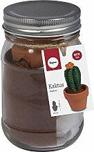 53936000 BP: Kaktus, 5cm ø, 10cm, Glas 1Stück
