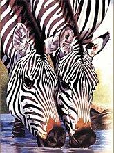 5D DIY Diamant Gemälde Tier Zebra Strass