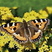 5D Diy Diamantmalerei Schmetterling Blumenbild