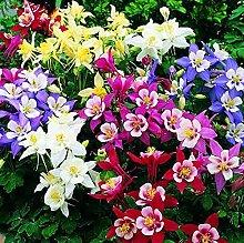 5D DIY Erwachsene Diamant Malerei Pflanze Blume