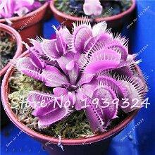 6: 100 Stücke Blau Insektenfressende Pflanze