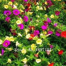 6: Big Sale Hanging Petunia Samen, Garten Petunia,