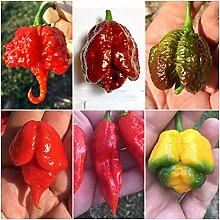 60 Reinen Samen Der 6 Heißesten Chili In Der Welt