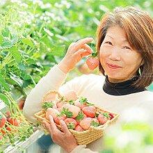 600pcs weiße Creme Erdbeeresamen Original Food Balkon Topf Bonsai Pflanze vegateble und Obst für Hausgarten