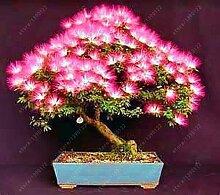 60pcs / bag Importierte Albizia Samen gemischt Blooming Mimosa Silk Bonsai Topfgarten Zierpflanze für Blumentopf Pflanzer 3