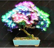 60pcs / bag Importierte Albizia Samen gemischt Blooming Mimosa Silk Bonsai Topfgarten Zierpflanze für Blumentopf Pflanzer 5