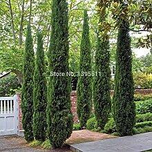 60PCS Frühling Grassamen Sukkulenten Pflanze Grassamen DIY Bonsai Topf Garten Heim Exotische Pflanze Interessante