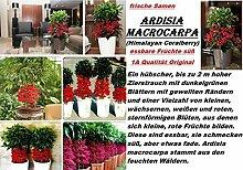6x Ardisia macrocarpa Zimmer Kübelpflanze Samen Pflanze essbar süß Garten #303