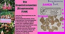 6x Engelstrompeten Brugmansia pink Samen Original Baum Sträucher Pflanze #235