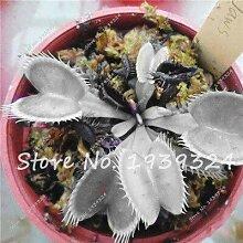 7: 100 Stücke Blau Insektenfressende Pflanze