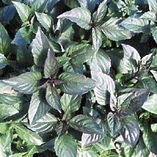 7,8 g Bio-Zimt-Basilikum-Samen ~ 4000 Seeds ~