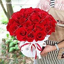 7: Rose-Blumensamen Garten Blumen Hochzeit