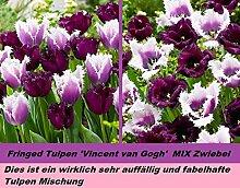 7x Zahn Tulpen Mix Weiß Lila Mix Mischung Tulpen Blumen Selten In DE Rarität Neu Blumen Garten Pflanze Selten in DE Neu R4