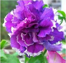 8: 100 Stücke Garten Petunia Blütenblätter