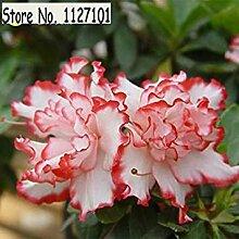 8: 100 Teile/beutel 22 arten Azalee Blumensamen