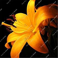 8: Neue 50 Teile/beutel Lilie Blumensamen Parfüm